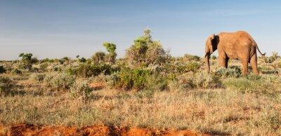 Фотообои Слон в Восточный Цаво, Кения