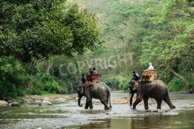 Фотообои Слон поход через джунгли на севере Таиланда