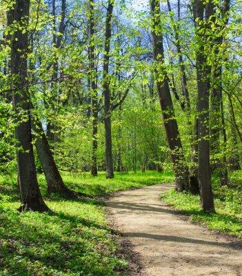 Фотообои Пустой путь в весеннем парке