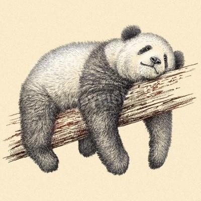 Фотообои выгравировать изолированный панда иллюстрации эскиз. линейное искусство