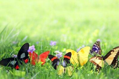 Фотообои Экзотические бабочки обрамление зеленый фон травы