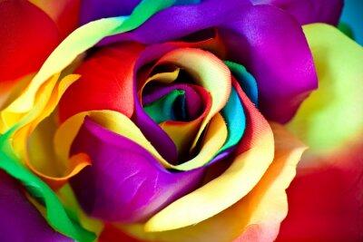 Фотообои поддельные цветок розы