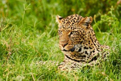 Фотообои Женский портрет леопарда