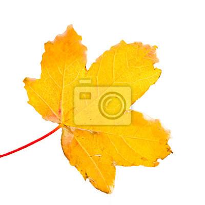 Фотообои Поле кленовый лист в осеннем парке