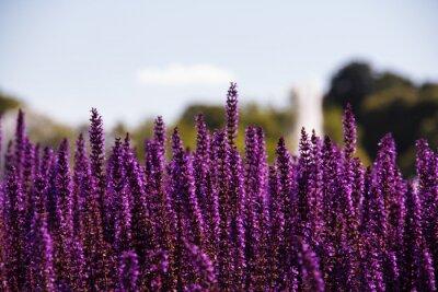 Фотообои Область фиолетовые цветы