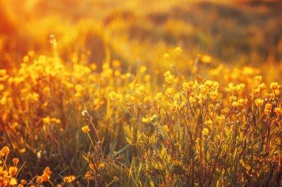 Фотообои Поле весенних цветов