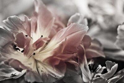 Фотообои Изобразительное искусство крупным планом Тюльпаны, размытыми и острыми