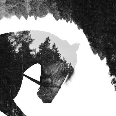 Фотообои Еловый лес внутри лошади в искусстве, multiexposition