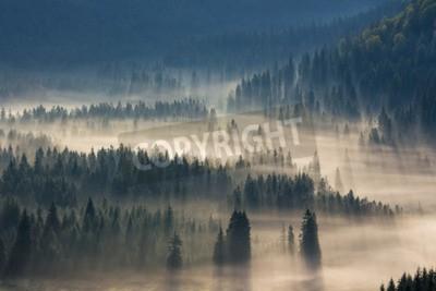 Фотообои ели на лугу вниз волю к хвойном лесу в туманных горах