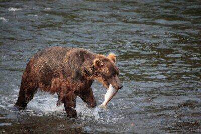 Фотообои рыбалка медведь