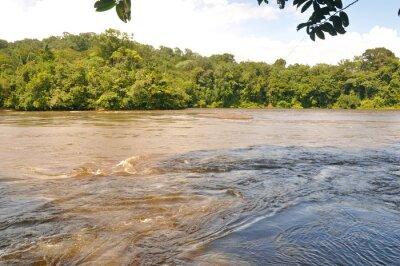 Фотообои Fleuve d'amazonie