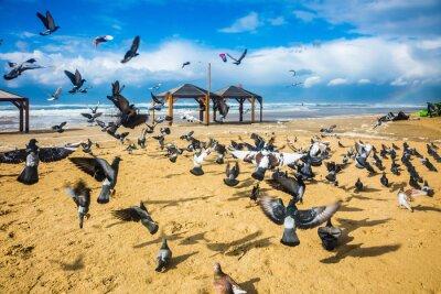 Фотообои Стая голубей шумно отступает