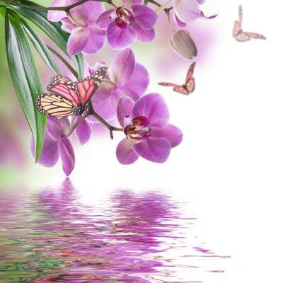 Фотообои Цветочный фон тропических орхидей и бабочки