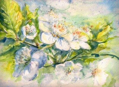 Фотообои Цветущие ветви вишневого дерева акварель окрашены