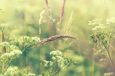 Фотообои Цветение Луг
