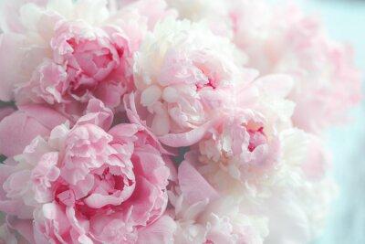 Фотообои Пушистые розовые пионы цветы фон