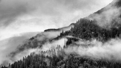 Фотообои туман на вершине горы с соснами