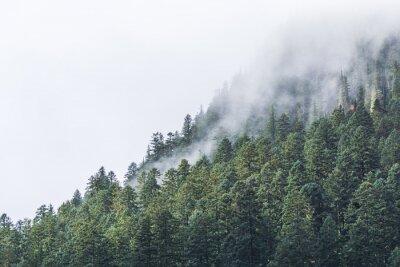 Фотообои Вечером туман над форрестом.