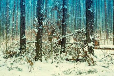 Фотообои Туманный сосновый лес покрытый первым снегом