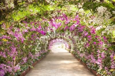 Фотообои тропинка в ботаническом саду с орхидеями, выстилающих путь.