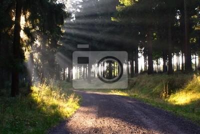 Фотообои лес # 11