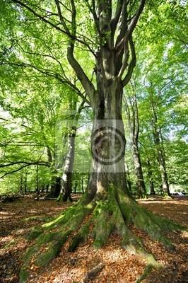Фотообои Wald