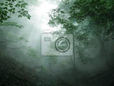 Фотообои 森林