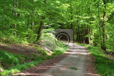 Фотообои Лесная дорога