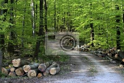 Фотообои forêt