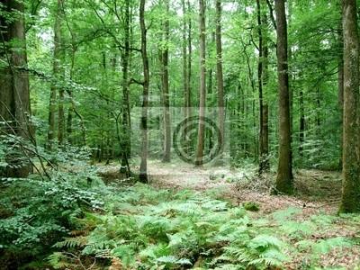 Фотообои Forêts