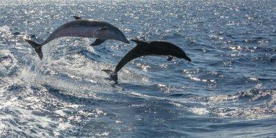 Фотообои фрай schwimmende Delfine вор Teneriffa