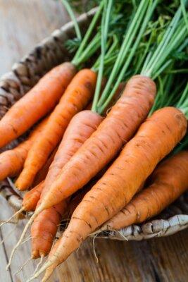 Фотообои свежей моркови пука