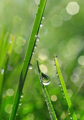 Фотообои Свежая зеленая трава с каплями росы крупным планом. Природа фон