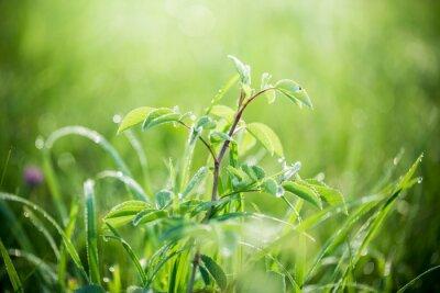 Фотообои Свежая зеленая трава с каплями воды на фоне солнечного света лучей. Мягкий фокус