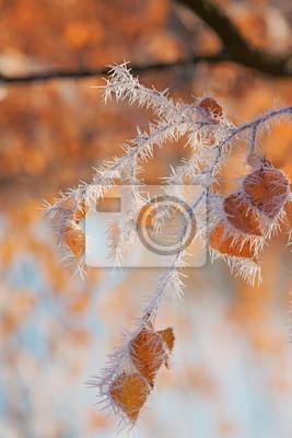 Фотообои ИЗМОРОЗЬ ветви дерева