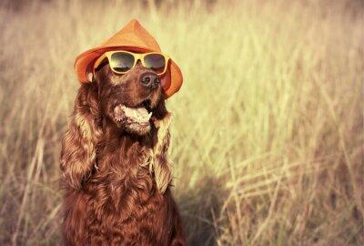 Фотообои Смешные собаки