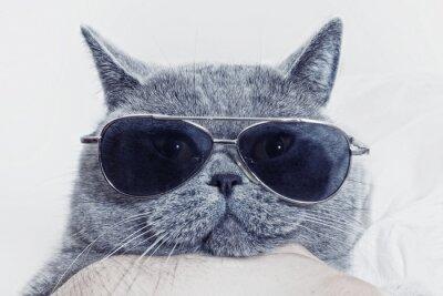 Фотообои Смешные морда серый кот в солнцезащитные очки