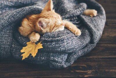 Фотообои Gigner kitten sleeping