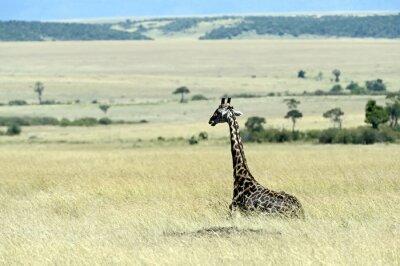 Фотообои Жираф в саванне