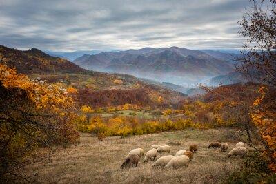 Фотообои Золотая осень / осень Удивительный вид на горном лугу в центральных Балканских гор, Болгария