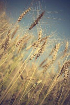 Фотообои золотое поле пшеницы и солнечный день