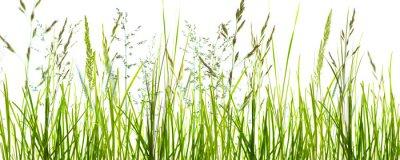 Фотообои Gräser, grashalme, wiese vor weißem hintergrund