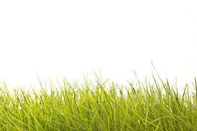 Фотообои Листья травы
