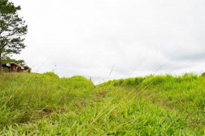 Фотообои трава Маунтин