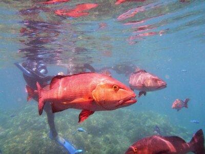 Фотообои Большой Барьерный риф Рыба