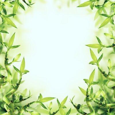 Фотообои Зеленый бамбук предпосылки. Спа и Здоровый
