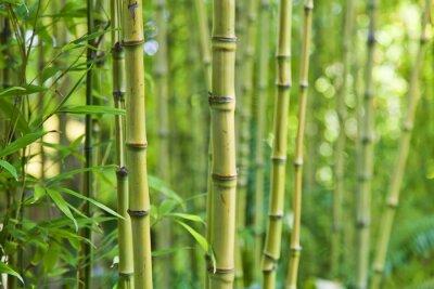 Фотообои Зеленый бамбук природа фоны