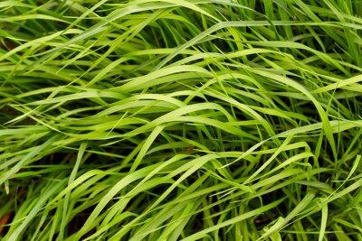 Фотообои Зеленая трава фон