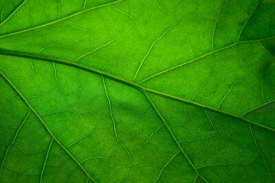 Фотообои Зеленый лист