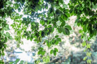 Фотообои фон зеленые листья